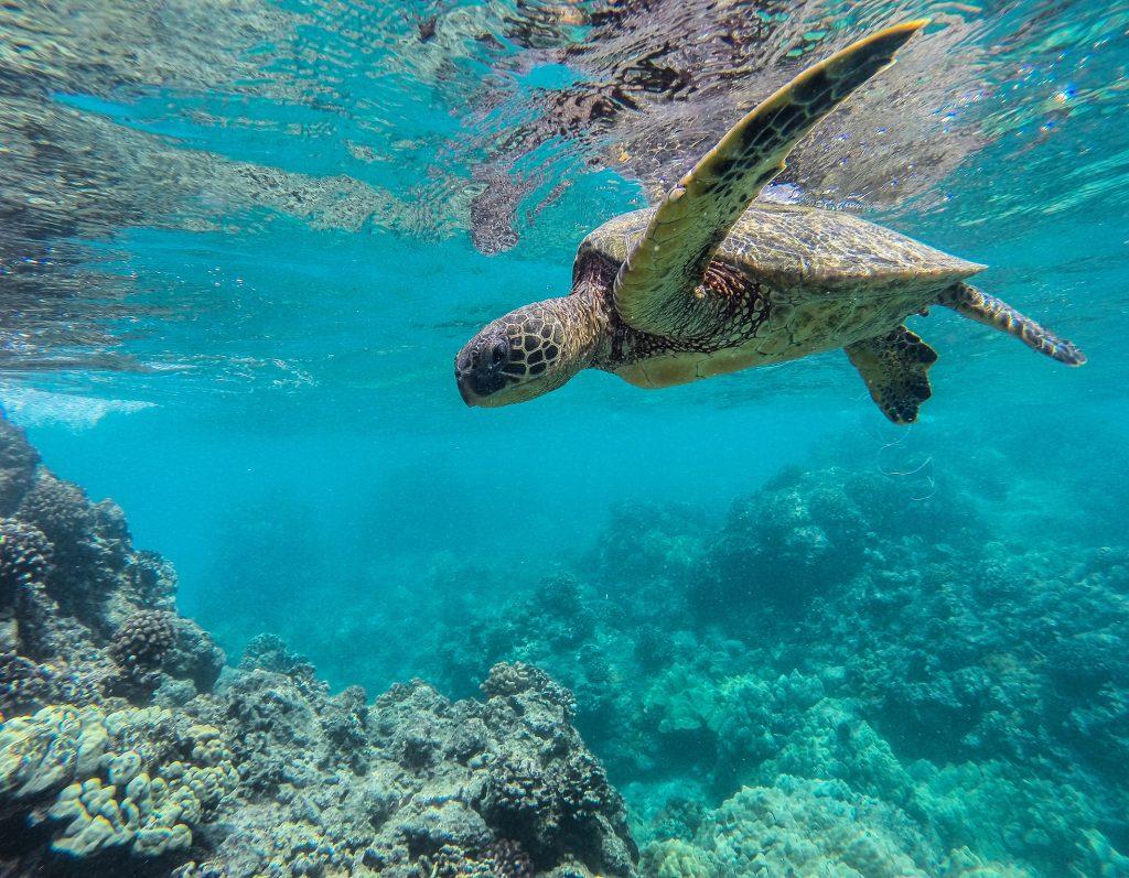 Hana Bay Maui Snorkeling