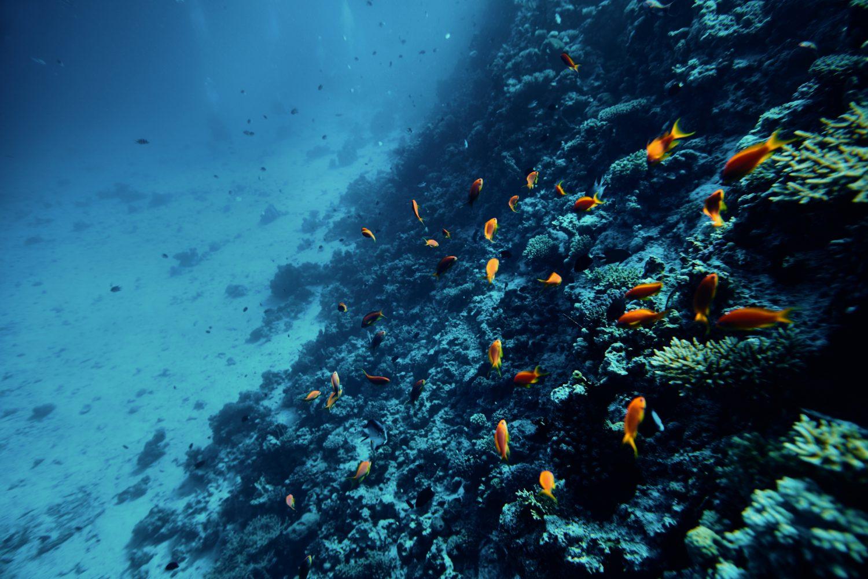 underwater amazing take ocean sea smartphone oceans cruise beach swimming lounge ship