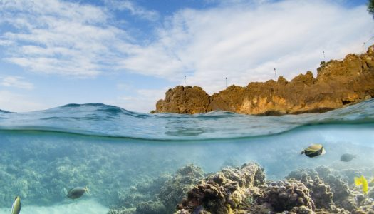5 Best Places to Snorkel in Maui & Why