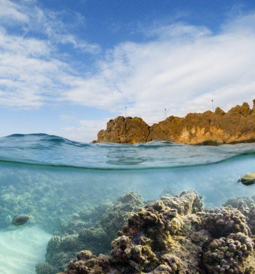 Top Snorkel Spots in Maui