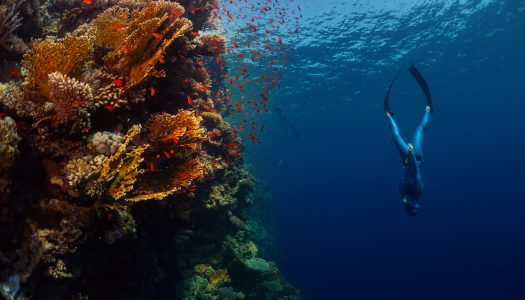 Overcoming the Deep: The Psychology and Physiology of Freediving.